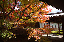 東福寺の中